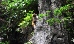 monkey-in-luon-cave